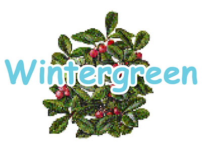 Wintergreen Flavor E-Liquid